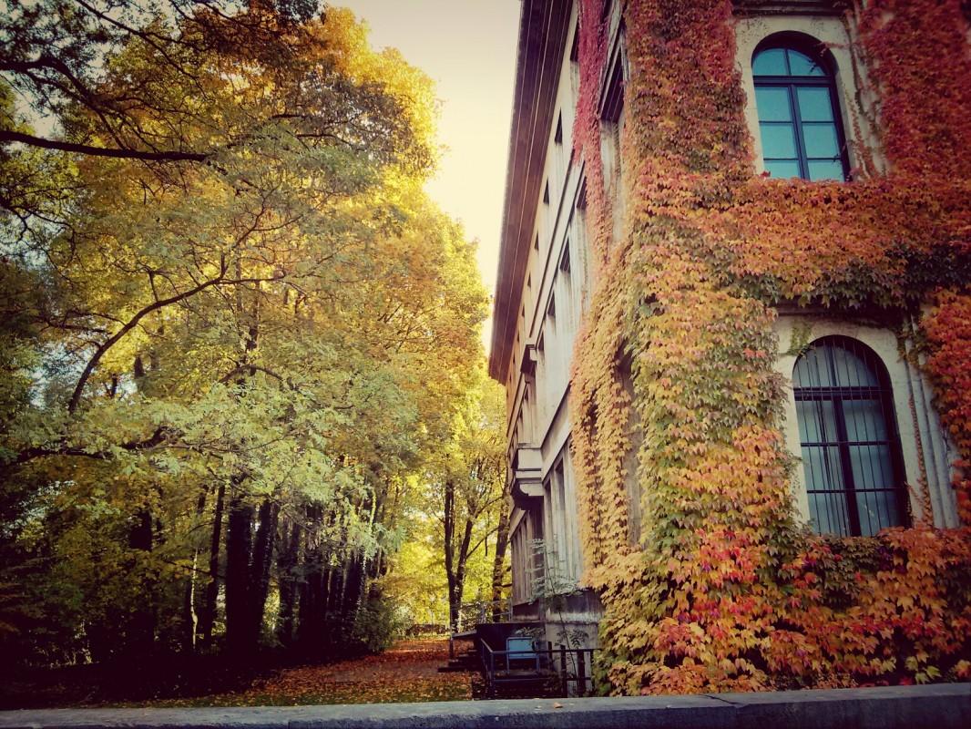 Colors of Autumn Munich